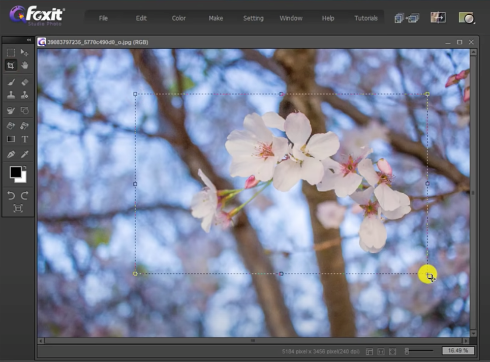crop and resize images with Foxit Studio Photo - 4